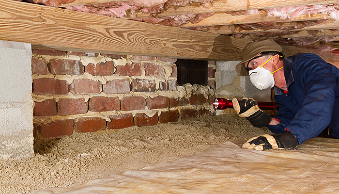 Man checking insulation